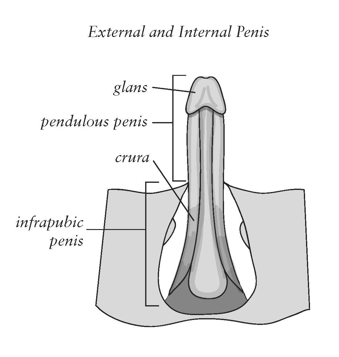 Hang penis floor, anal slits in skin
