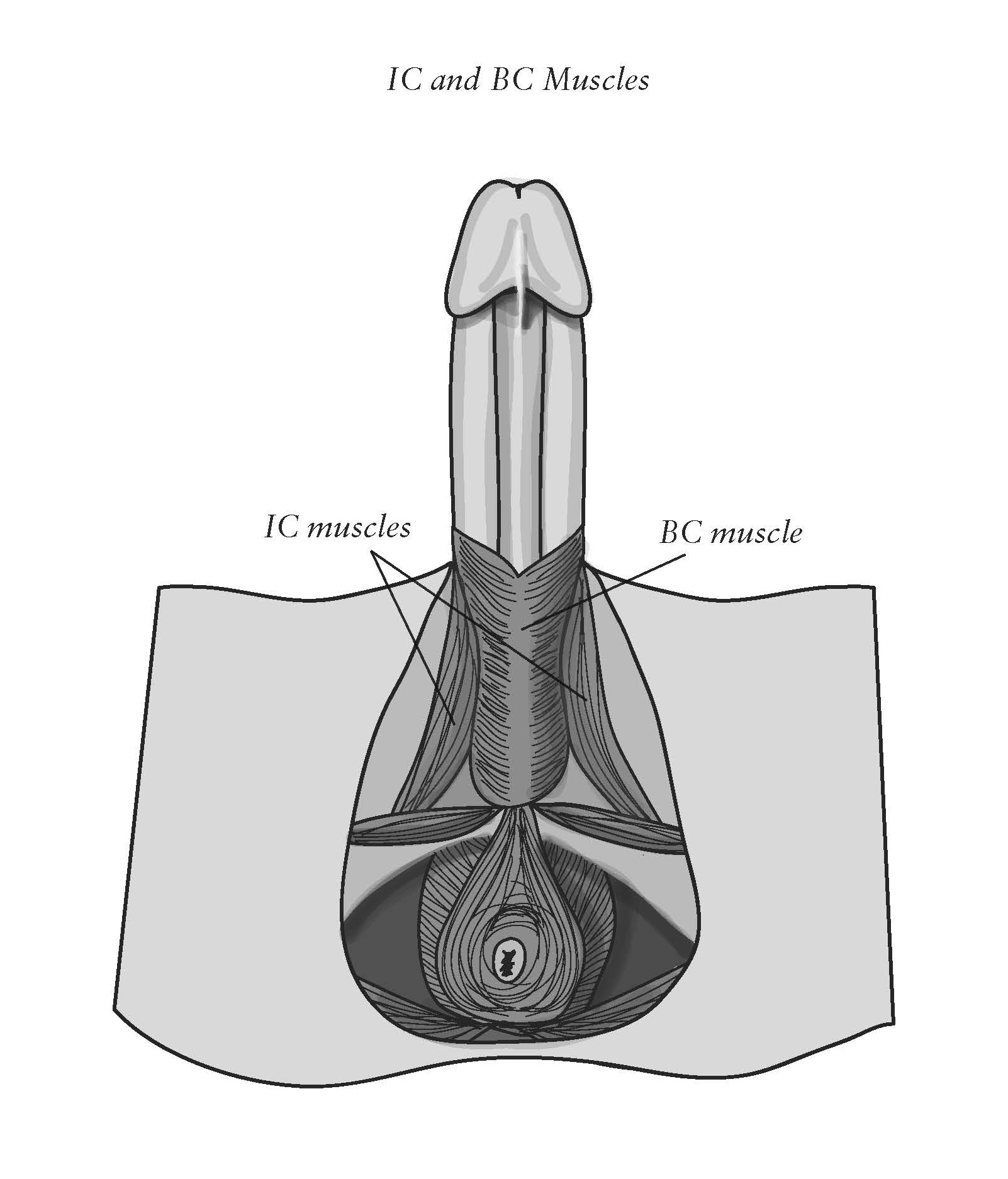 Fitness exercise for strong clitoris and penis