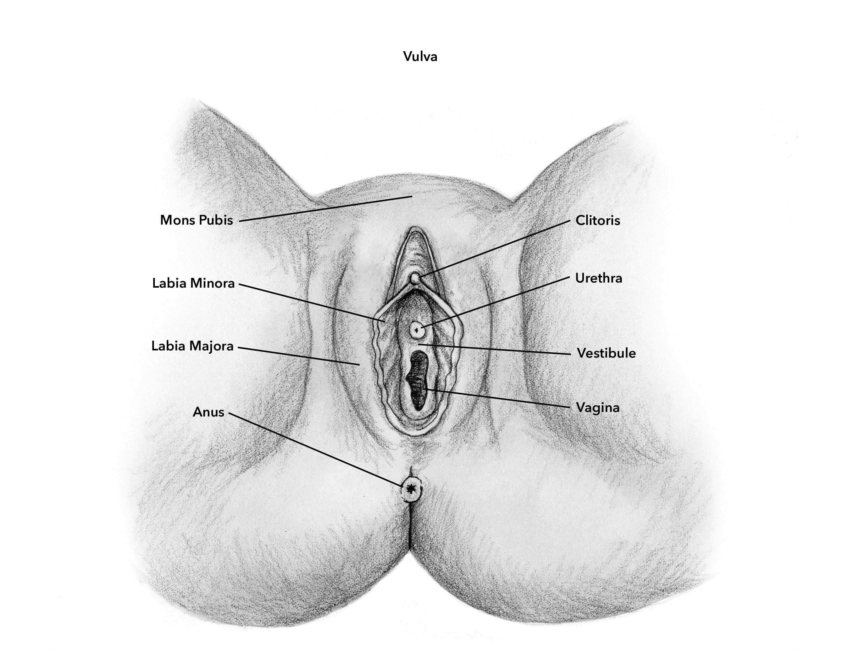 Diagram of clit, farang ding dong porn dvds