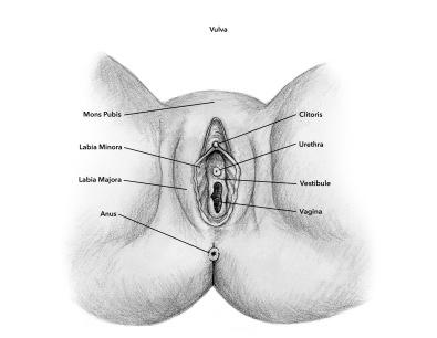5. vulva