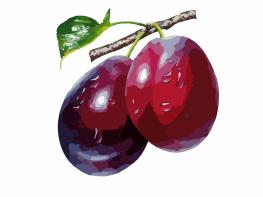 pixabay plums