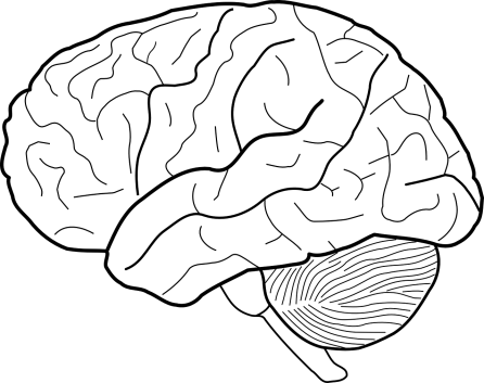 brain-303186_1280.png