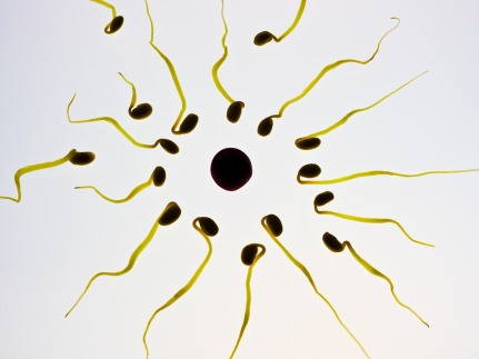 Egg Sex Cell Sperm Winner Fertilization