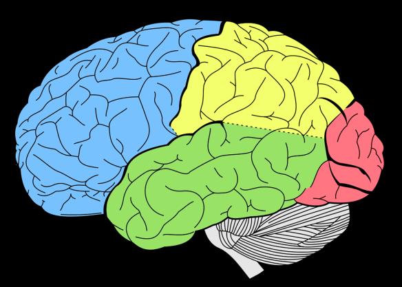 brain-1007686_1280