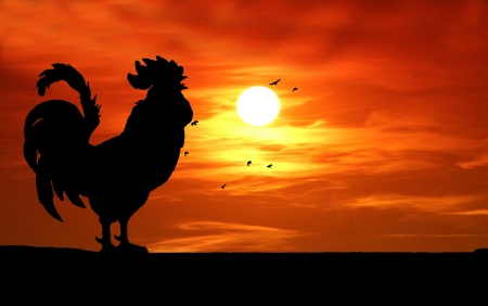 rooster-silhouette-crowing-sunrise